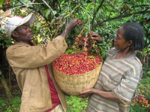 farmers-ethiopia